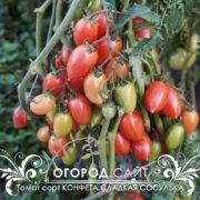 томат конфеты сладкие сосульки фото характеристика