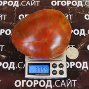 томат красавица колледжа фото сорта