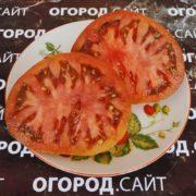 томат красавица колледжа характеристика