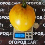 томат король сибири характеристика
