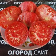 томат абаканский розовый характеристика
