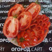 сорт томата этуаль