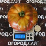 томат шоколадная молния характеристика +и описание сорта