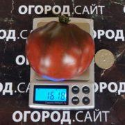 томат винный кувшин характеристика фото сорта