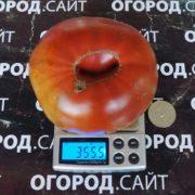 сорт томата ворлон