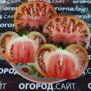томат ворлон характеристика