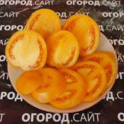 Томат Алтайский золотой