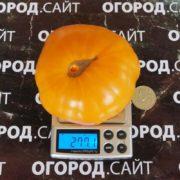 Томат Апельсиновый щербет амишей