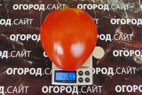 Томат Белорусское сердце