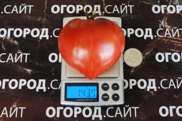 Томат Дробленое сердце