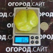 Томат Зелёный перец