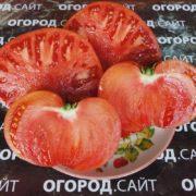 Томат Черногория