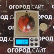 pomidor-Томат Мохнатый Кейт (красный)ohnaty-keyt-krasny-3