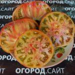 мутная мамба семена томата