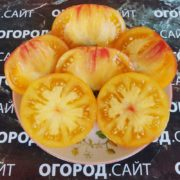 Томат Золотая медаль (картофельный лист)