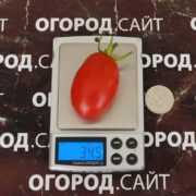 pomidor-rozovy-izyum-1