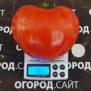 Томат Немецкая красная клубника
